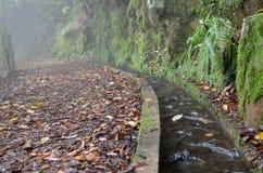 Dos Cedros Levada: Fanal к Ribeira da Janela, типу оросительных каналов, Мадейре, Португалии Стоковые Фото