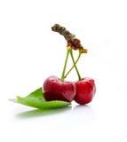 Dos cerezas deliciosas en el fondo blanco Imagenes de archivo