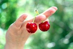 Dos cerezas rojas disponibles Fotografía de archivo libre de regalías