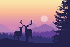 Dos ciervos que se colocan en bosque conífero debajo de las montañas y de yello ilustración del vector