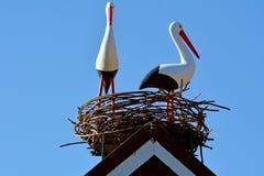 Dos cigüeñas blancas europeas Imagen de archivo libre de regalías