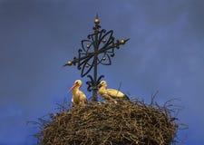 Dos cigüeñas blancas europeas, ciconia, en la jerarquía Fotos de archivo