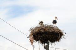 Dos cigüeñas en la jerarquía Fotos de archivo libres de regalías
