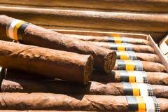 Dos cigarros en un humidor por completo de cigarros Fotos de archivo