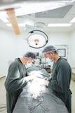 Dos cirujanos veterinarios en sala de operaciones Foto de archivo libre de regalías