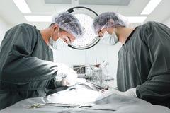 Dos cirujanos veterinarios en sala de operaciones Foto de archivo