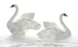 Dos cisnes. Imagenes de archivo