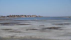dos cisnes en el hielo de la primavera de las plumas limpias del lago metrajes