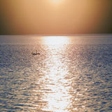 Dos cisnes en la natación del adolescente de la puesta del sol en el lago Fotografía de archivo
