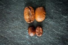 Dos clases de café: habas grandes y pequeñas Imagen de archivo libre de regalías