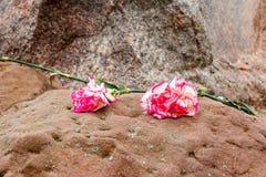Dos claveles rosados en una piedra Fotos de archivo libres de regalías