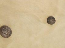 Dos cocos frescos de la palma Imagen de archivo libre de regalías