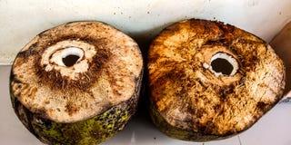 Dos cocos jovenes frescos tomados del agua foto de archivo