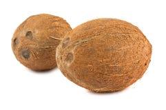 Dos cocos maduros Imagen de archivo libre de regalías