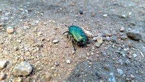 Dos coloré d'un scarabée Photos stock