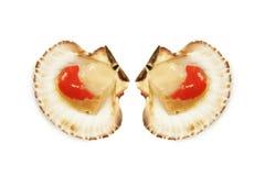 Dos conchas de peregrino en los shelles Imagen de archivo libre de regalías