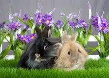 Dos conejitos del angora en un jardín de flores Fotografía de archivo libre de regalías