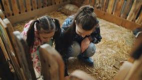 Dos conejitos el dormir de Pat de las hermanas pequeños en el zoo-granja almacen de metraje de vídeo