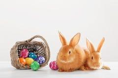 Dos conejitos rojos con los huevos de Pascua en el fondo blanco Imagen de archivo