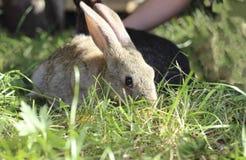 Dos conejos Imagenes de archivo