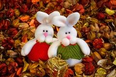 Dos conejos blancos en el fondo coloreado Foto de archivo libre de regalías