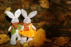 Dos conejos mullidos Fotografía de archivo libre de regalías