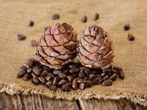 Dos conos de cedro con las nueces Imagenes de archivo