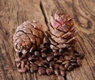 Dos conos de cedro con las nueces Foto de archivo