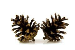 Dos conos del pino Imagen de archivo libre de regalías