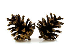 Dos conos del pino Imagen de archivo