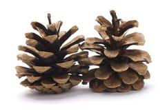 Dos conos del pino Imagenes de archivo