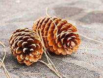 Dos conos grandes del pino Imágenes de archivo libres de regalías