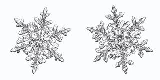 Dos copos de nieve aislados en el fondo blanco foto de archivo libre de regalías