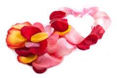 Dos corazones que se enclavijan con el pétalo color de rosa Foto de archivo