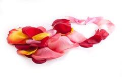 Dos corazones que se enclavijan con el pétalo color de rosa Foto de archivo libre de regalías