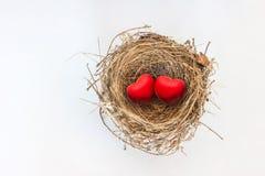 Dos corazones rojos en jerarquía del pájaro de la naturaleza Fotos de archivo libres de regalías
