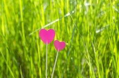 Dos corazones rosados en la hierba Fotografía de archivo
