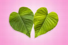 Dos corazones verdes en Gradated y fondo rosado texturizado foto de archivo libre de regalías