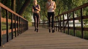 Dos corredores femeninos hermosos jovenes con las colas de caballo que activan en parque a través del puente, pérdida de peso, ap almacen de metraje de vídeo