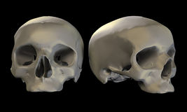 Dos cráneos Fotografía de archivo libre de regalías