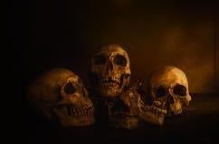 Dos crânios da cabeça vida ainda Foto de Stock Royalty Free