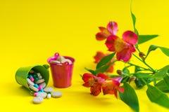 Dos cubos por completo de píldoras con la flor Imagen de archivo libre de regalías