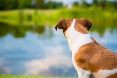 Dos de chien sur le paysage de nature de fond Images libres de droits