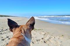 Dos de tête d'un chien brun de bouledogue français avec les oreilles pointues devant la plage de vacances d'été et le paysage d'o image stock
