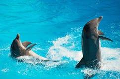 Dos delfínes Imagen de archivo