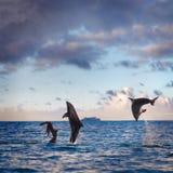Dos delfínes del salto que juegan con la muchacha en el mar foto de archivo