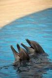 Dos delfínes lindos Fotos de archivo libres de regalías