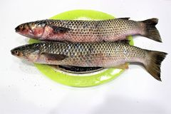 Dos destripados, salado y sazonados con pimienta caballas están en un plato coloreado El plato está en la tabla blanca Adobo ante foto de archivo libre de regalías