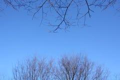 Dos diferentes tipos de ramas secas contra el cielo azul Imagen de archivo libre de regalías
