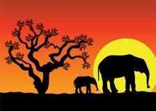 Dos elefantes stock de ilustración